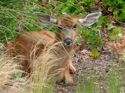 deer400